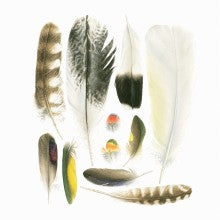 Greeting Card - Matteo Grilli - Feathers