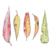 Greeting Card - Matteo Grilli - Leaves