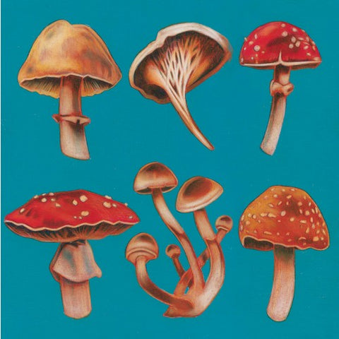Greeting Card - Stephanie Chambers - Mushrooms