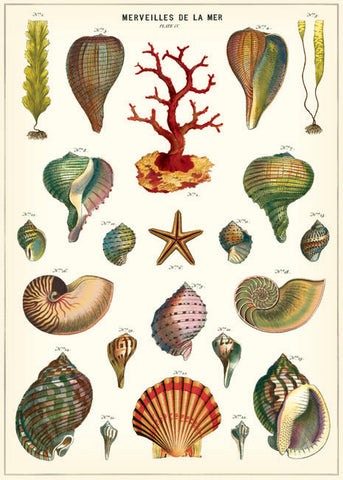 Cavallini & Co Wrap - Shells of the Sea, Dragonflytoys