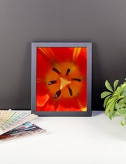 Orange Flower Framed Poster Photo - Susanne Ferrante - 2