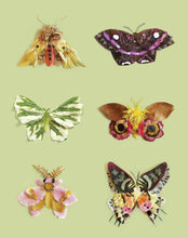 Load image into Gallery viewer, Flora Forager Butterfly Card Set