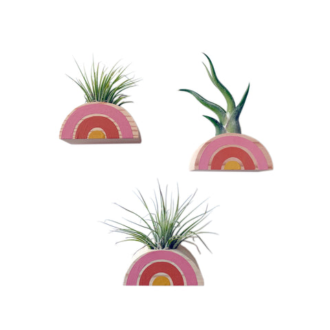 Rainbow Air Plant Holder