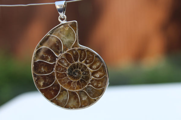 Large Ammonite Fossil Pendant - Amazon Imports, Inc. - Fine Quality Gemstones and Jewelry Since 1978