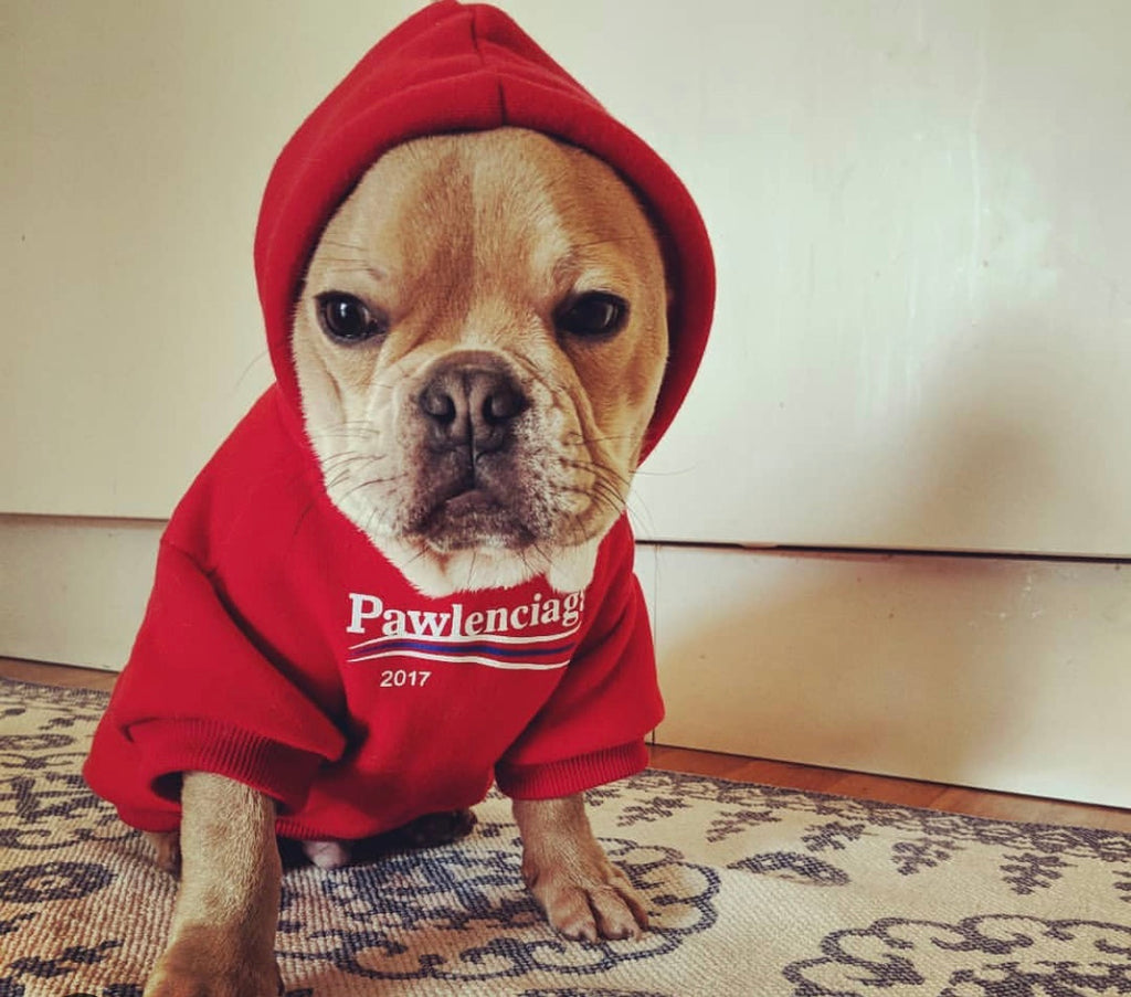 Fresh Off The Doggy Runway.
