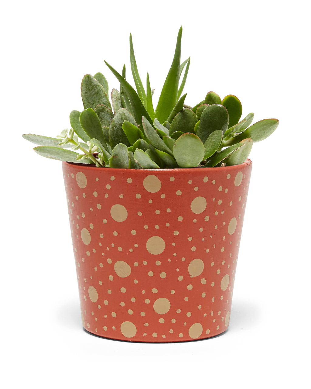 sienna colored polka dot planter with plant