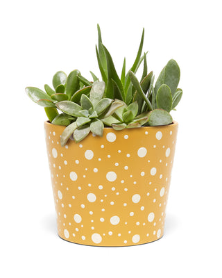 yellow polka dot planter with plant