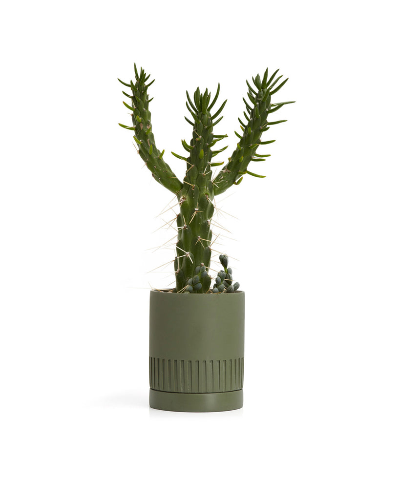 This Etch Pot by Capra Designs comes in an agave green color.