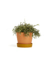 This Small Louise Pot by Capra Designs comes in a desert and golden two-tone color.
