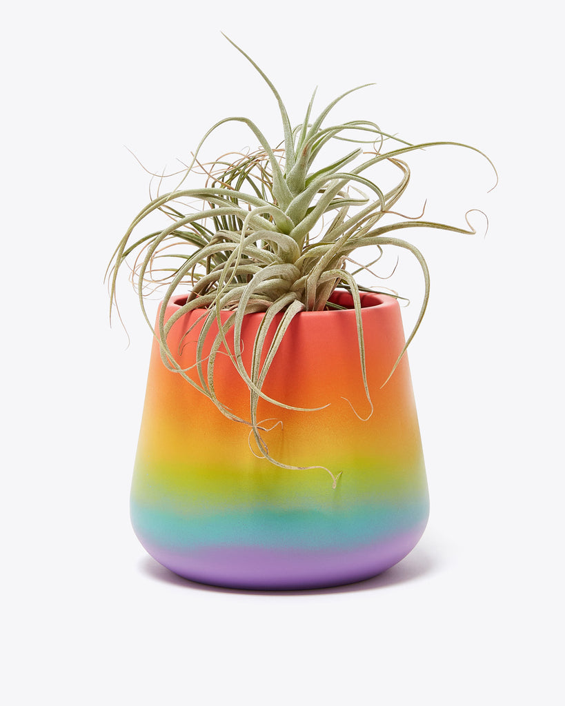 large cement rainbow colored planter shown with a plant