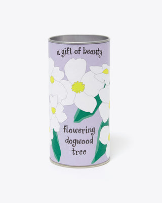 flowering dogwood tree seed kit