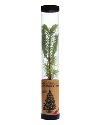 live packaged christmas tree