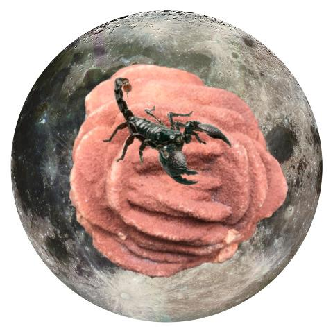 "Scorpion and Barite Rose 5"" x 5"" Full Moon Oracle Print"