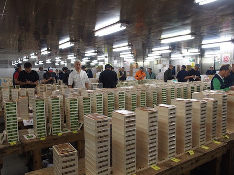 Sea Urchin, Uni Auction, Tsukiji market