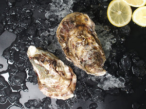 Japanese Pacific Oyster [Hokkaido]