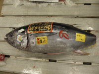 Fresh Hon Maguro [Bluefin Tuna]