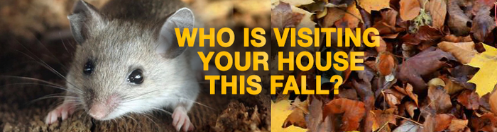 Top 4 Things To Remember When Dealing With Rodents This Fall