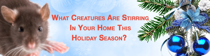 What Creatures Are Stirring in Your Home This Holiday Season?