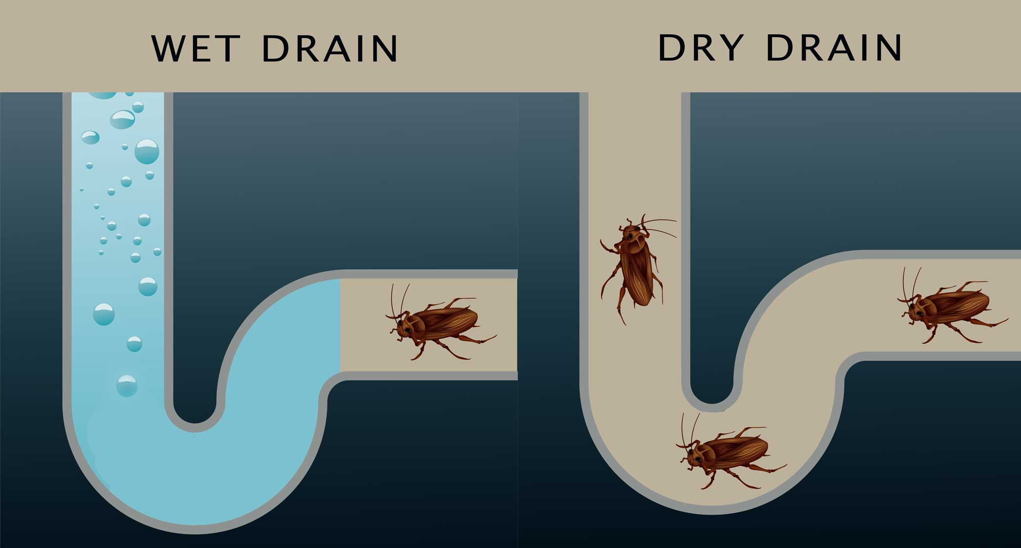 roaches stopped by a wet p-trap in a drain pipe verses roaches that can get into a house through a dry p-trap drain