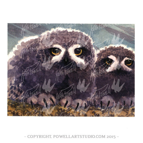 039P - Keith Powell's / Baby Snowy Owls