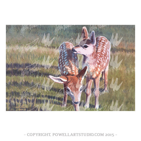 032P - Keith Powell's / Fawns