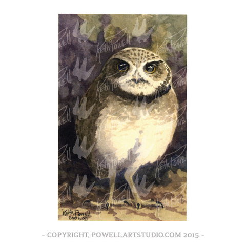 046P - Keith Powell's / Burrowing Owl