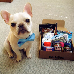 Bark Box dog gifts