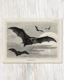 Bat Specimen Card