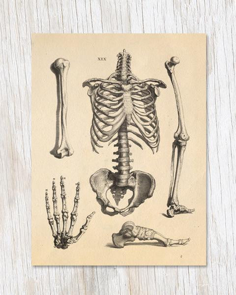 Skeleton Anatomy Card