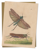 Grasshopper Specimen Greeting Card