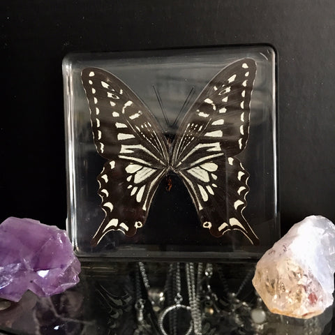 Lucite Swallowtail Butterfly