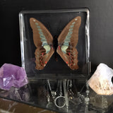 Lucite Bluebottle Butterfly