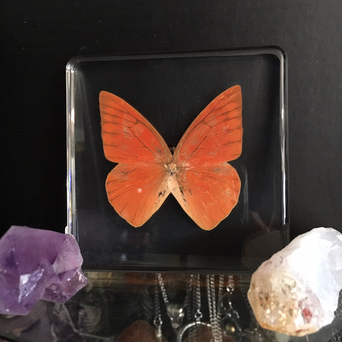 Lucite Orange Albatross Butterfly
