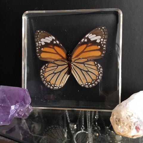 Lucite Tiger Butterfly