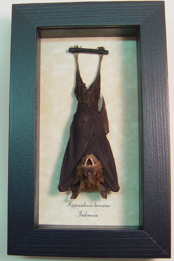 Medium Hanging Bat Framed
