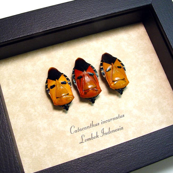 Orange Man Face Beetles Framed