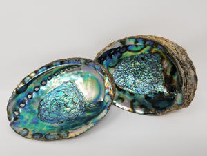 Large Abalone Shell