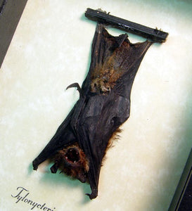 XSmall Hanging Bat Framed