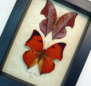 Red Leaf Mimic Butterfly Set