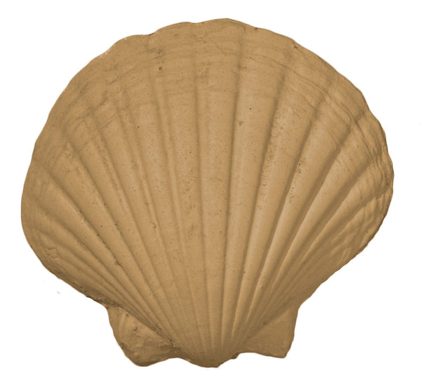 Efex Coastal Shell Scallop large CC11
