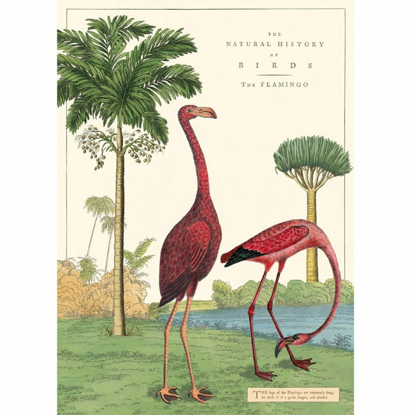 Flamingo vintage chart poster print scroll