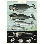Load image into Gallery viewer, Vintage whale chart poster print