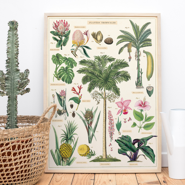 Tropical banana tree botanic poster chart print