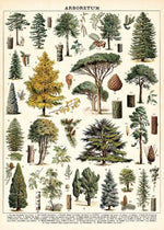 Load image into Gallery viewer, Trees vintage chart poster print