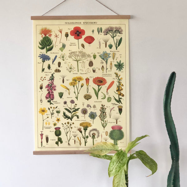 Wild flower vintage chart poster print scroll