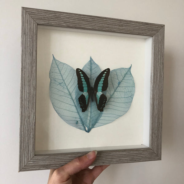 Framed dried leaf and real butterfly wall hanging art