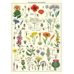 Load image into Gallery viewer, Wild flower vintage chart poster print scroll