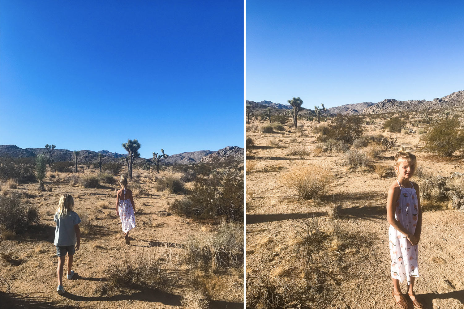 Daisy and Cruz Free in Joshua Tree