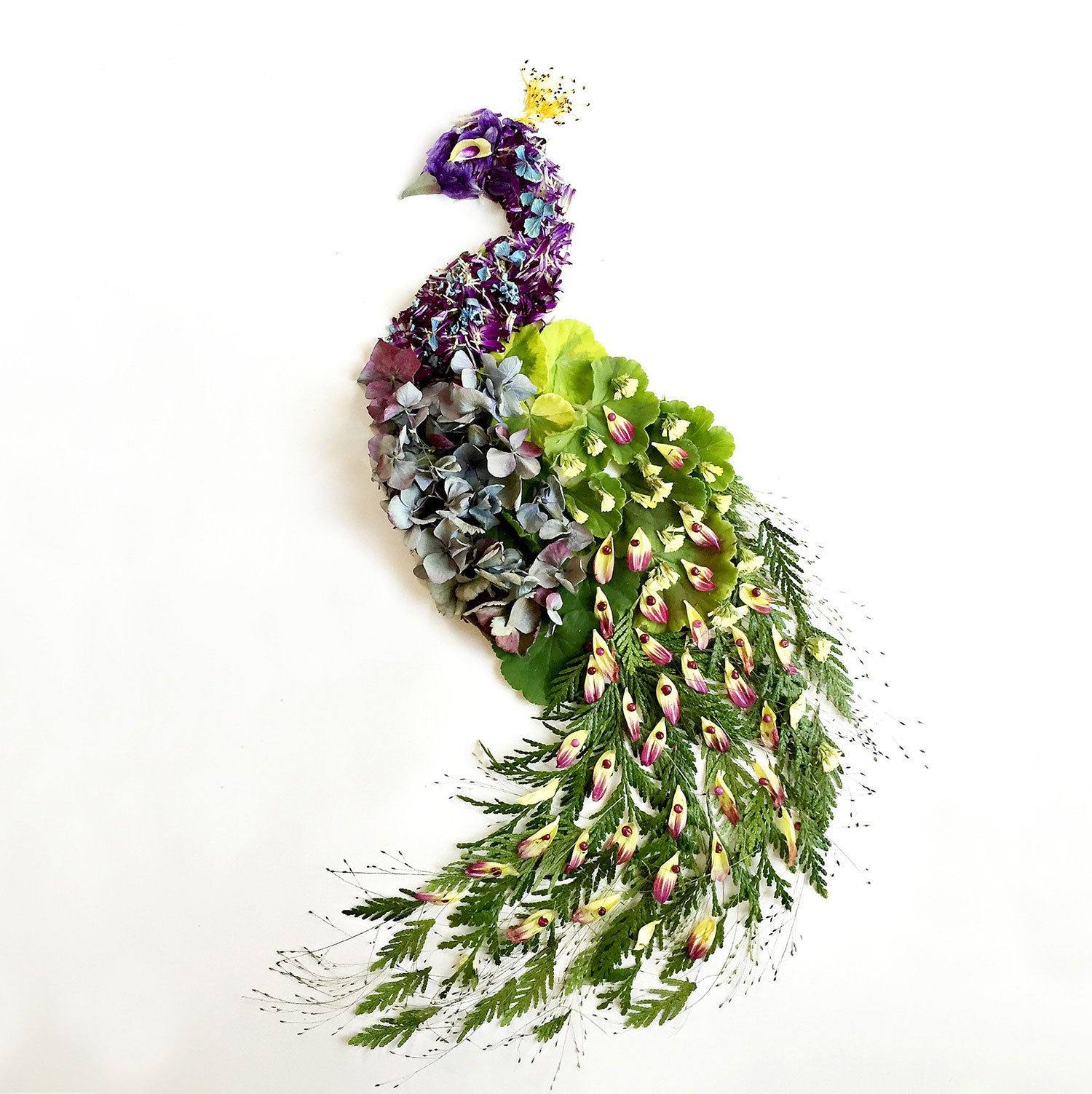 Peacock art by flora.forager