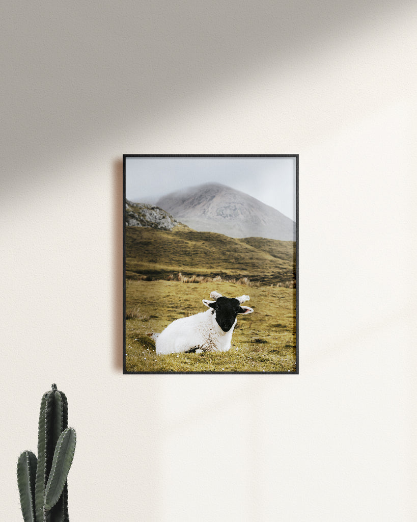 'Lamb in Skye' Fine Art Print - Lonely Closet